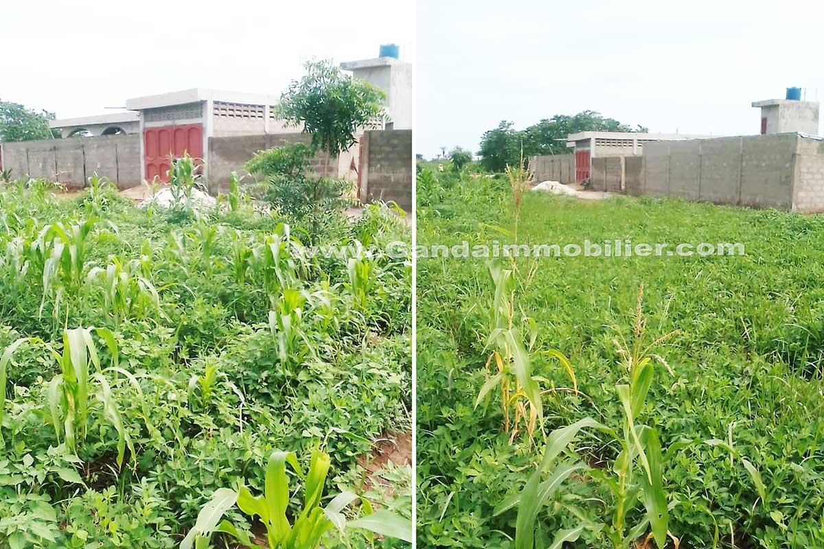 Parcelles loties et recasées à vendre à Ouedo 300 m des nouveaux logements sociaux – calavi